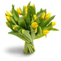 kievflower 31 yellow tulip_thm