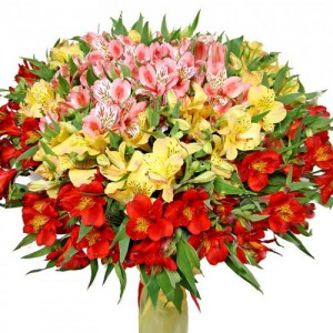 cvetov0